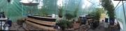 Greenhouse 61