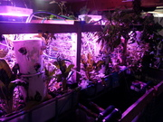 Indoor aquaponics for the winter