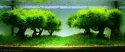 shade-of-grove