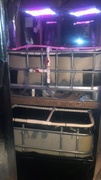 My 1st aquaponics system