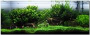 Aquascapes 002_wakrubau_aquascape_large