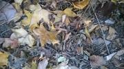 Leaf litter 002