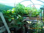 ap garden