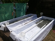 grow bed drain pipes