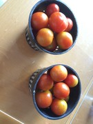 Tomato bounty 5.15.16
