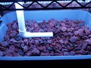 New Mini System added fish 3