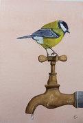 Bird on Tap
