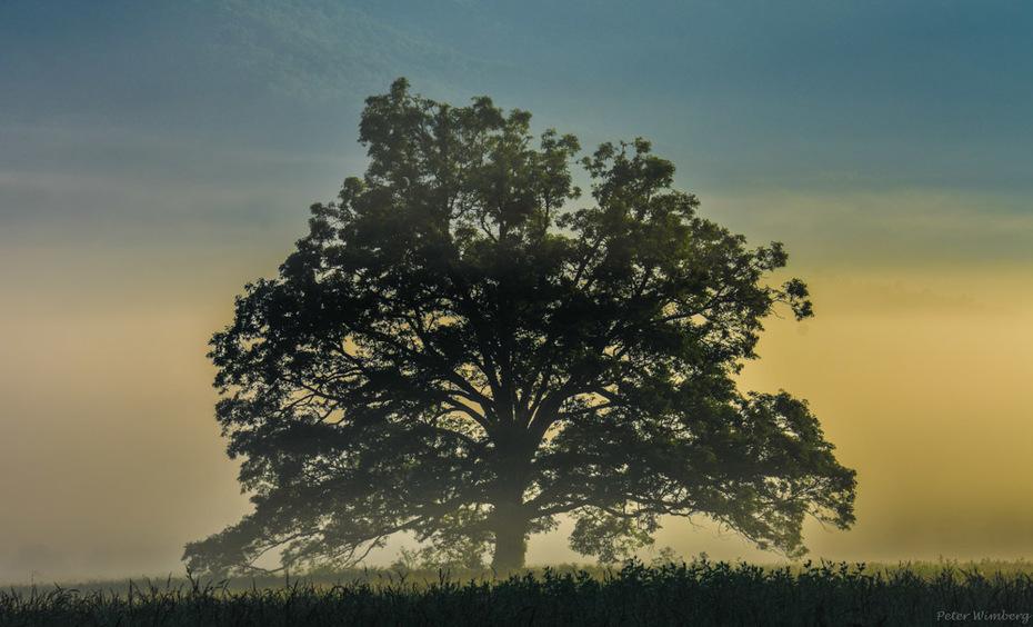 That Tree, Cades Cove, June 1 2019