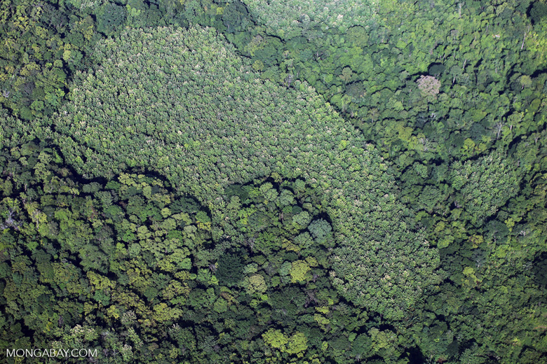 MONGABAY: Earth's hidden tree-microbe network mapped for the first time ever