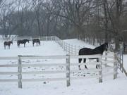 Copy of more horses 002