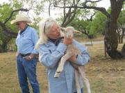 Sharan had a little lamb