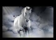 Winter white horse