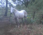 MY NEW HORSE CHUBBY