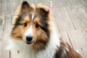ANTIQUING WITH DOGS PET FRIENDLY TIPS
