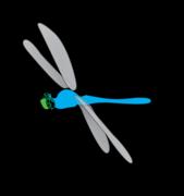 SPM Vector Components