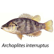 Sacramento Aquaponics