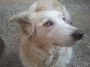 my dog name blue eyes