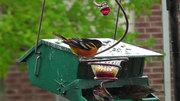 Spring, Summer Birds...