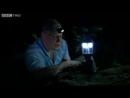 One of the First Creatures to Walk on Land - David Attenborough's First Life - BBC Two
