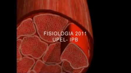 Contracción de la celula muscular