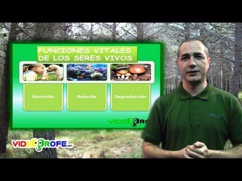 3º Conocimiento del Medio: 03. Las funciones vitales de los seres vivos Videoprofe.net