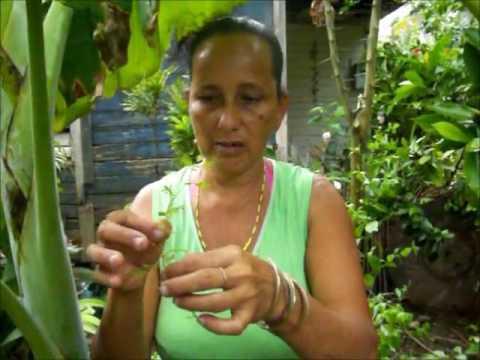 Carmen curandera yerbera---Carmen healer herbalist