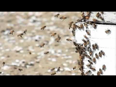 Beekeeper Leaks EPA Document