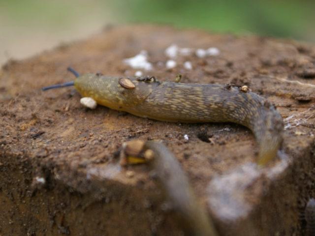 5 Seconds of Slug