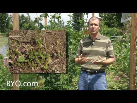Growing Hops - Brew Your Own Magazine