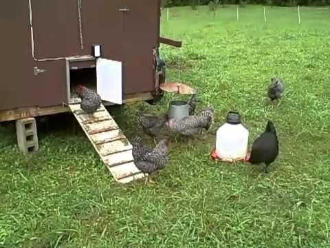 Cosmo Farm  Sept 18 2012