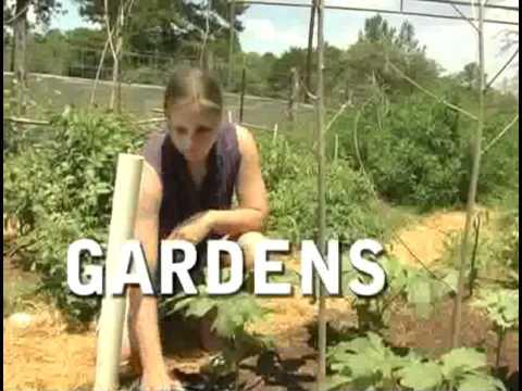 Marjory Wildcraft's Grow Your Own Groceries (Trailer)