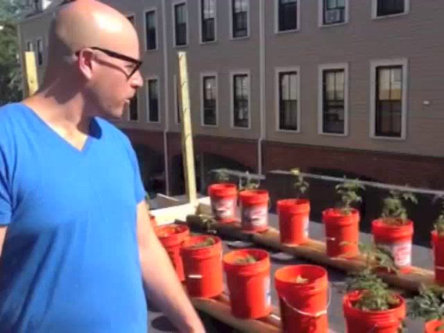 HOMEGROWN.org Gets a Tour of Matt's Subirrigated Roof Garden