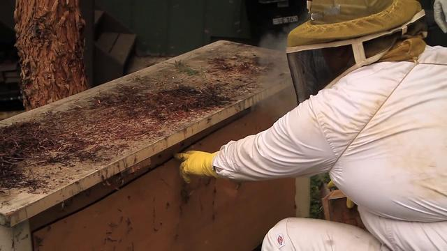 Urban Bee Rescue