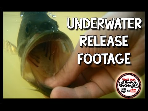 Underwater Bass Release Footage Clips