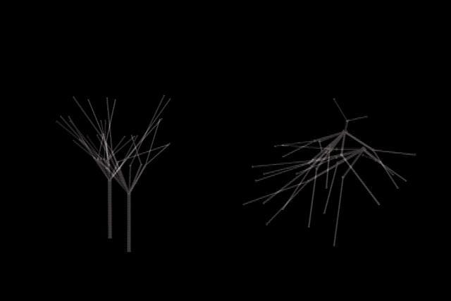 Branching Study