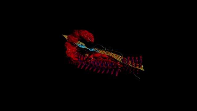 Mutant Baby 01 : Scorpion Project Create. ZBT