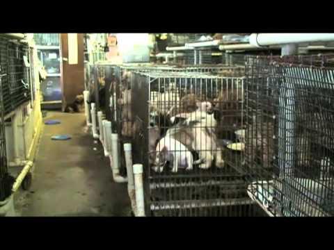 ¿De dónde vienen los perros de las tiendas de mascotas?