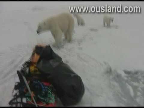 Borge Ousland encounters polar bears