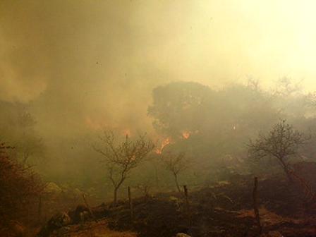 Incendio forestal de Jesus Maria