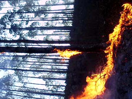 incendio de intiyaco