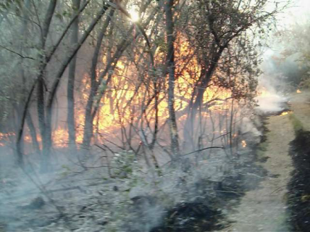Fuego forestal 05/11/11