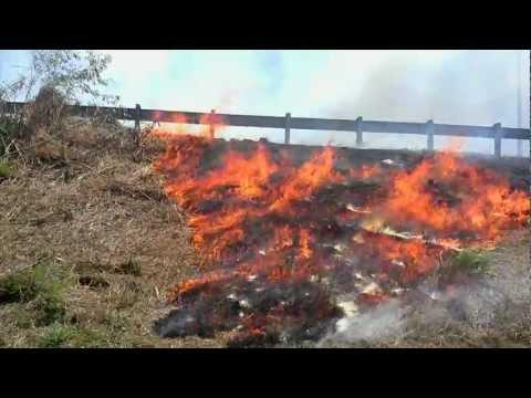 Fuego Forestal / Vídeo Musical de El Bombero Rapero