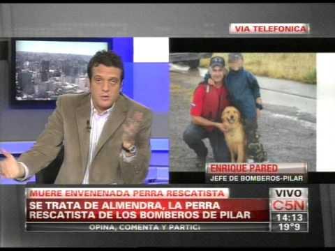 ENVENENAN A PERRA RESCATISTA / PILAR, BUENOS AIRES EN ARGENTINA