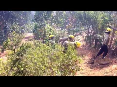 Apoyo Incendio forestal San Pedro - Chile