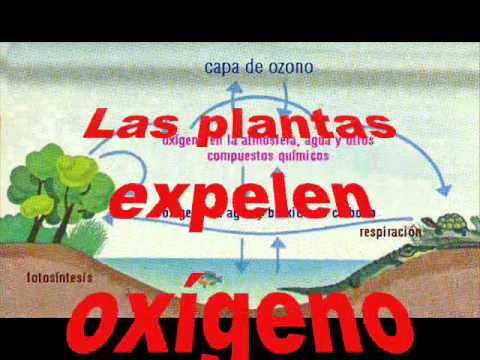 ...CiCLO DEL OXiGENO...