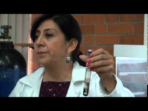 ...La UNAM a la vanguardia en crear electricidad con bacterias...