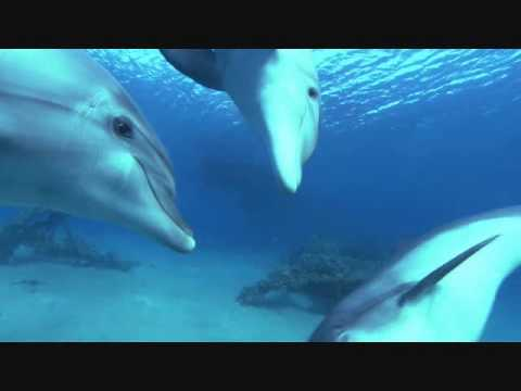 Whales, Dolphins and Chakras - Lemurian Returns
