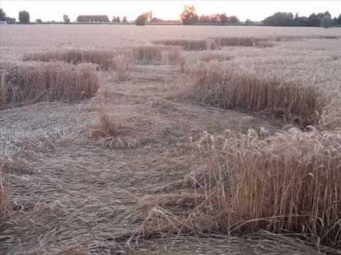 Crop Circles at Fabbrico , near Reggio Emilia, Italy- June, 2012 -Cerchi nel Grano-