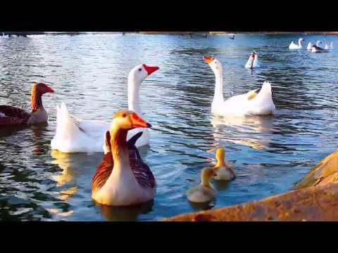 Echo Park Lake Memories