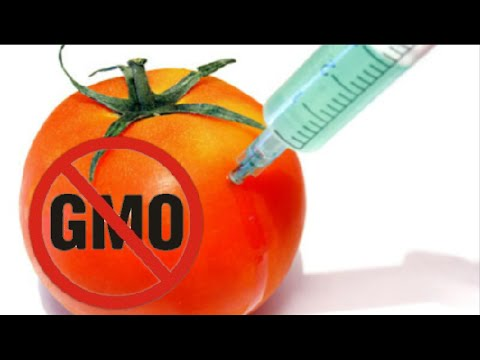 GMO Foods Are Killing Us? Warning!